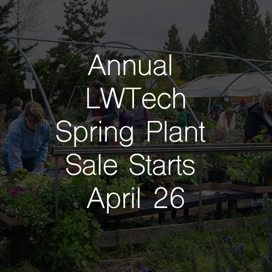 Annual Lake Washington Institute of Technology  Spring Plant Sale Starts April 26